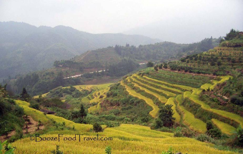 FujianRiceTerrace